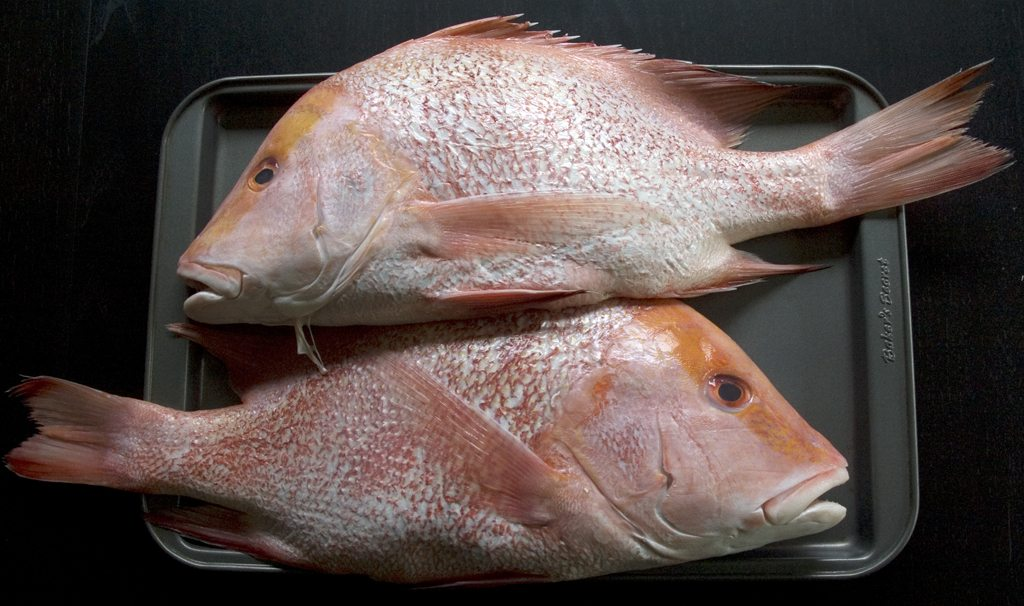 Red Emperor Fish