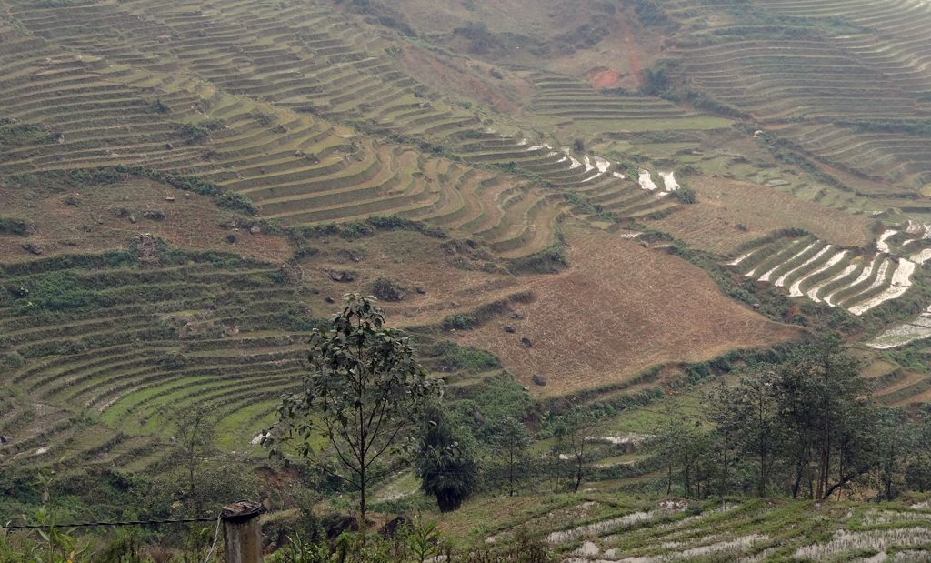 View of Rice Fields from Sapa Cooking Class
